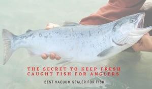 Best vacuum sealer for fish